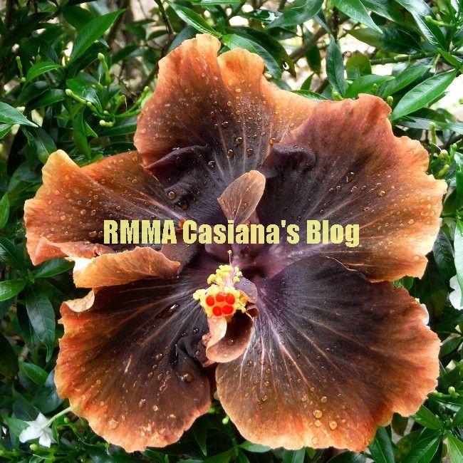 RMMA Casiana's Blog