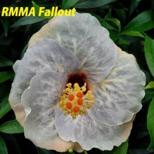 RMMA Fallout