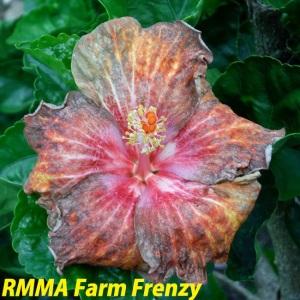 RMMA Farm Frenzy