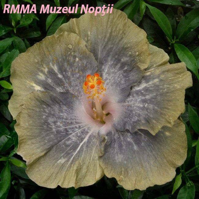 RMMA Muzeul Nopţii