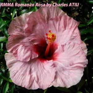RMMA Romanzo Rosa