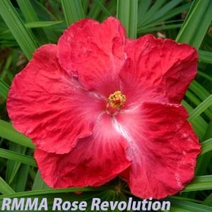 RMMA Rose Revolution