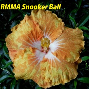 RMMA Snooker Ball