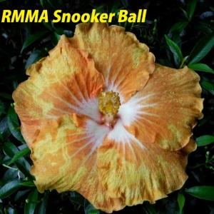 RMMA Snooker Ball