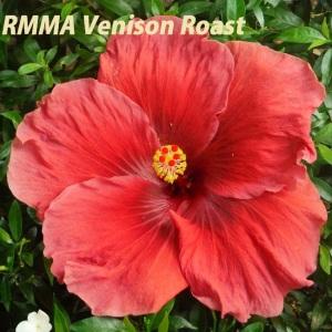 RMMA Venison Roast