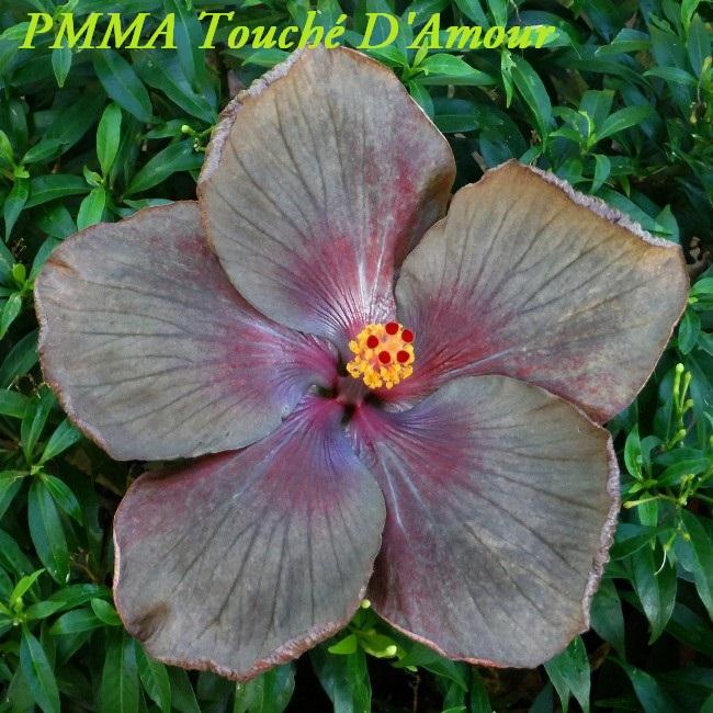 1 PMMA Touché D'Amour