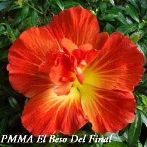 11 PMMA El Beso Del Final