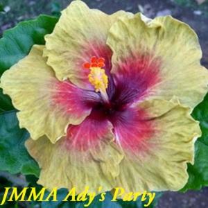 16-JMMA Ady's Party
