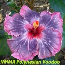1NMMA Polynesian Voodoo