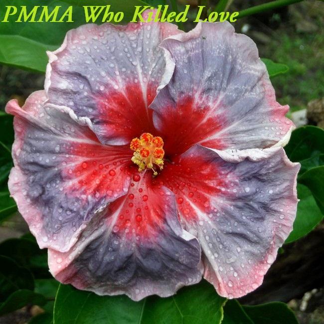 21 PMMA Who Killed Love