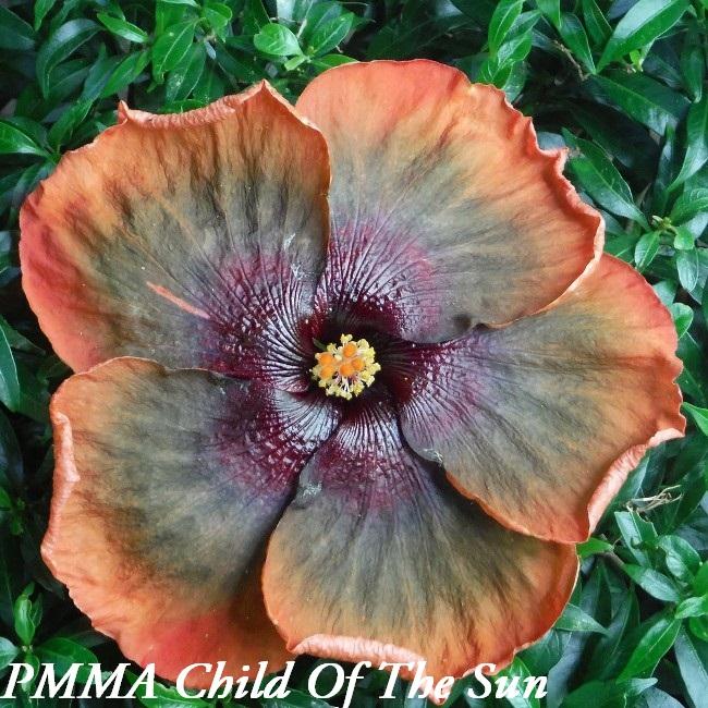 22 PMMA Child Of The Sun