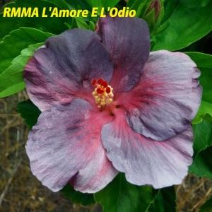 25-RMMA L'Amore E L'Odio
