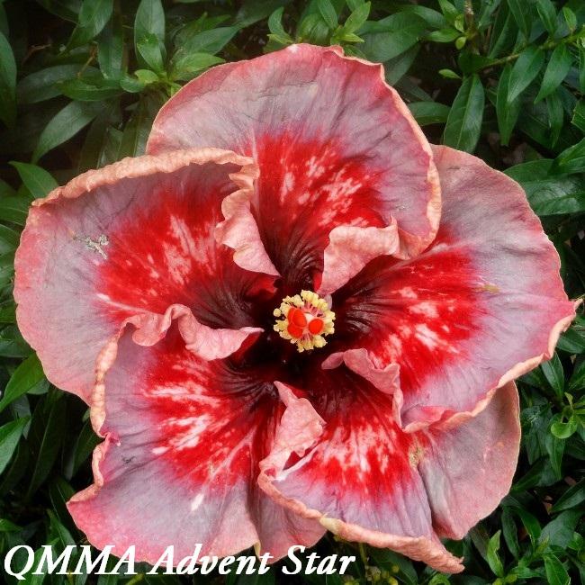 27 QMMA Advent Star
