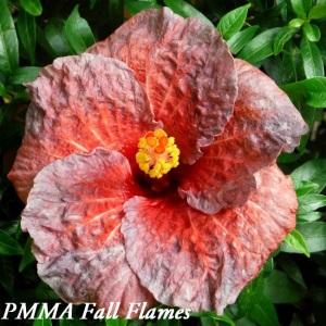 34 PMMA Fall Flames