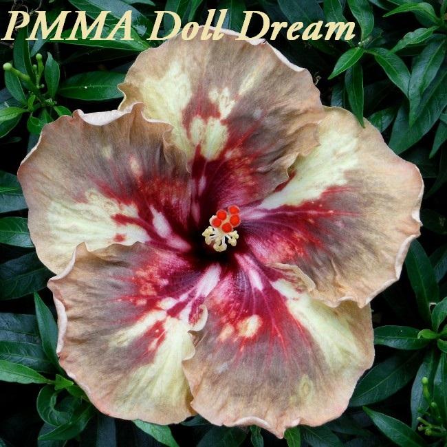 36-PMMA Doll Dream