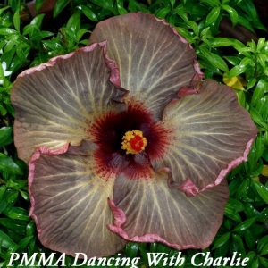 37 PMMA Dancing With Charlie