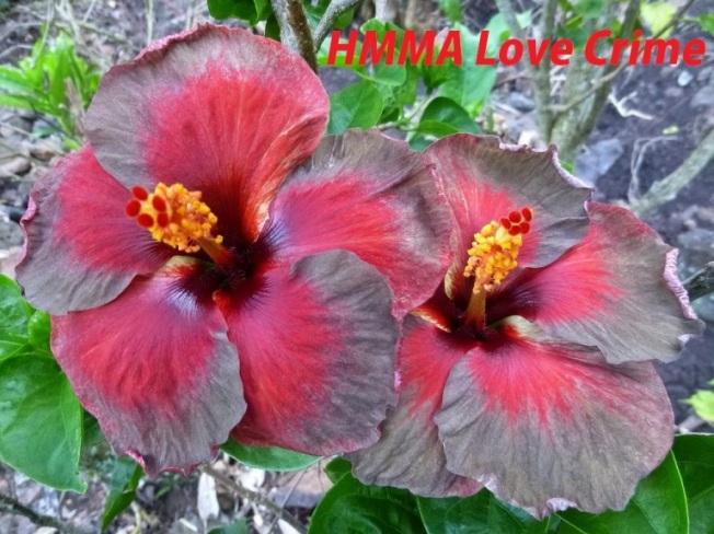 39 HMMA Love Crime