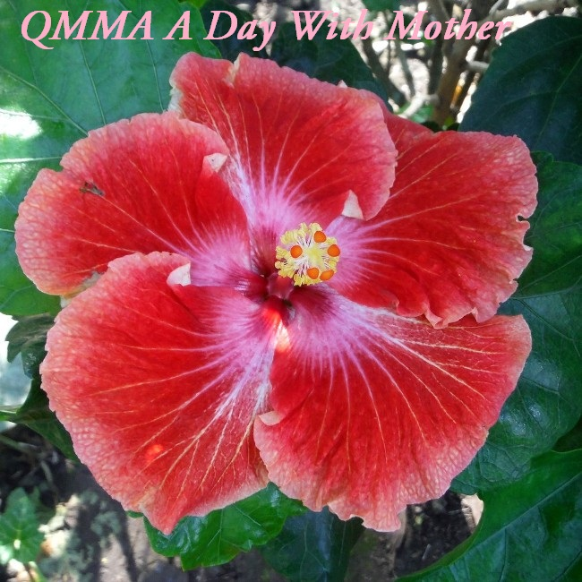 40 QMMA A Day With Mother
