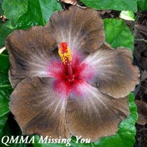 43 QMMA Missing You