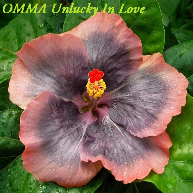 45 OMMA Unlucky In Love