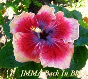 49-JMMA Back In Black