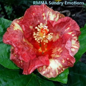 5-RMMA Sundry Emotions