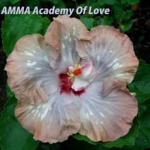 AMMA Academy Of Love