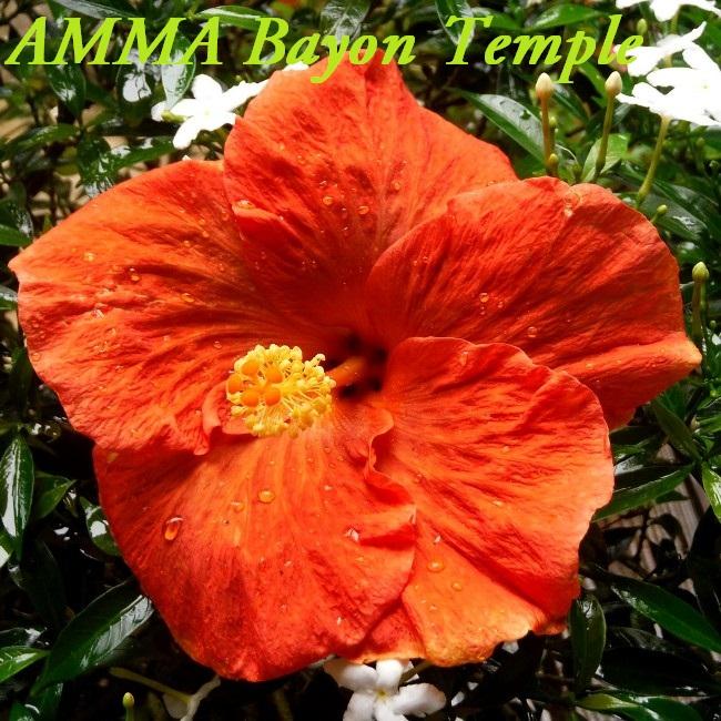 AMMA Bayon Temple