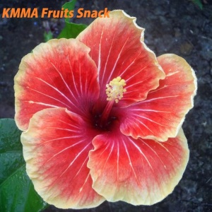 KMMA Fruits Snack