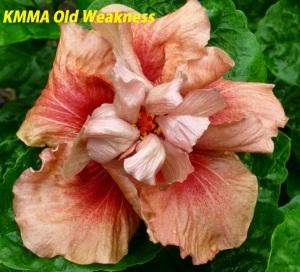 KMMA Old Weakness