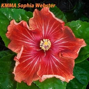 KMMA Sophia Webster
