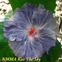 17 NMMA Kiss The Sky