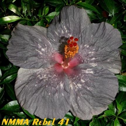 19 NMMA Rebel 41