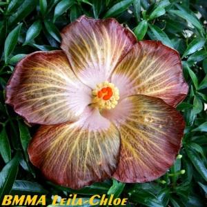 27 BMMA Leila-Chloe