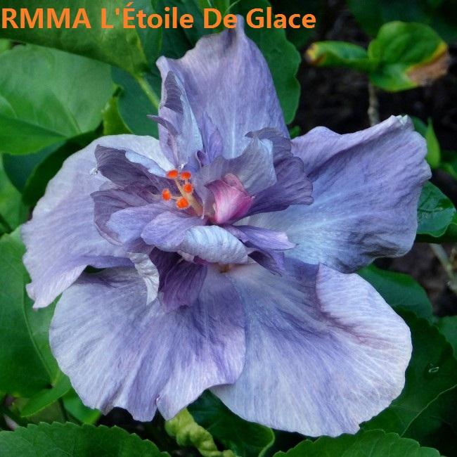 3 RMMA L'Étoile De Glace
