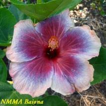 37 NMMA Baiona