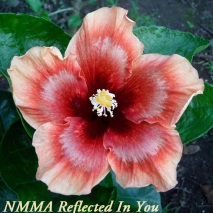 38 NMMA Reflected In You