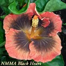 40 NMMA Black Heart