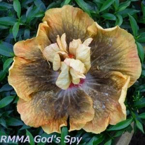 41 RMMA God's Spy