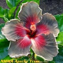 44 NMMA Apache Tears