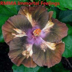 6 RMMA Immortal Feelings