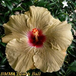 BMMA Beach Ball
