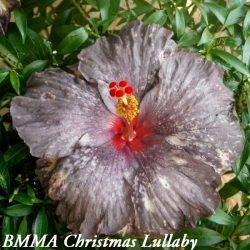 BMMA Christmas Lullaby