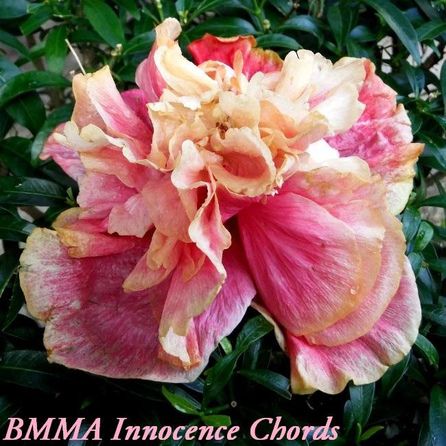 BMMA Innocence Chords