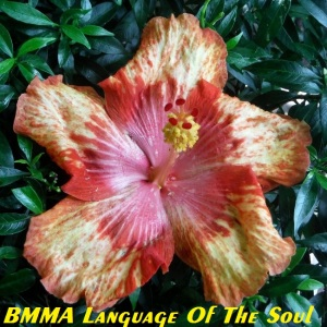 BMMA Language Of The Soul
