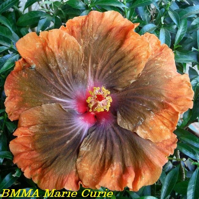 BMMA Marie Curie