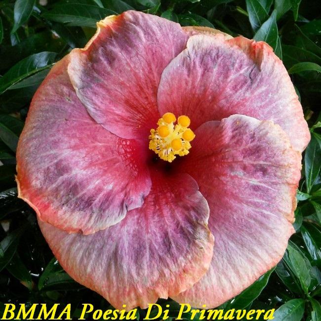 BMMA Poesia Di Primavera