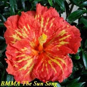 BMMA The Sun Song