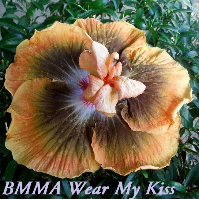 12 BMMA Wear My Kiss