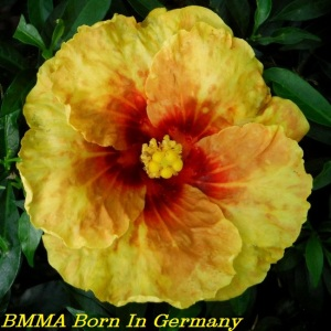 22 BMMA Born In Germany